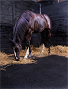 horse in a stall on a rubber mat